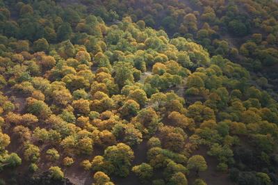 Autumn_chestnut_trees_valla_del_genal_1