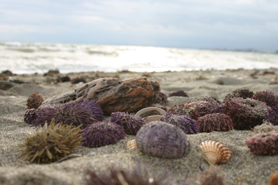 Estepona_sea_urchins