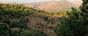 Chestnut Woodlands Surrounding Cartajima Near Ronda Andalusia